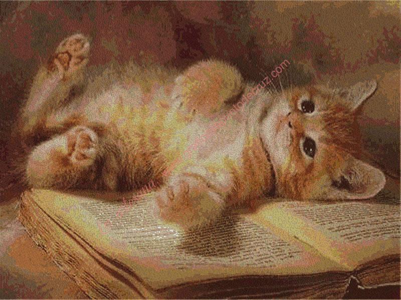 Gatito sobre un libro