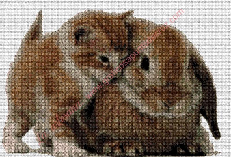 Conejito con Gatito